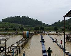 水上拓展项目